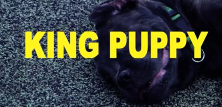 "Supreme – ""King Puppy"""